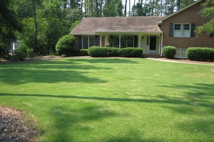 turf-grass-lawn