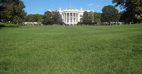 The South Lawn